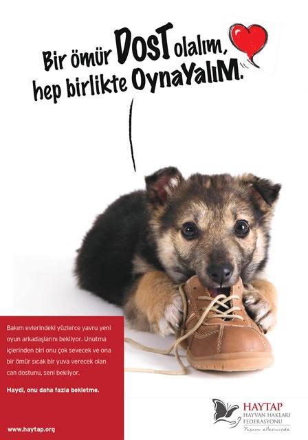Hayvanlara Yapılan Çocuk Şiddetinde Kurumların Harekete Geçirilmesi