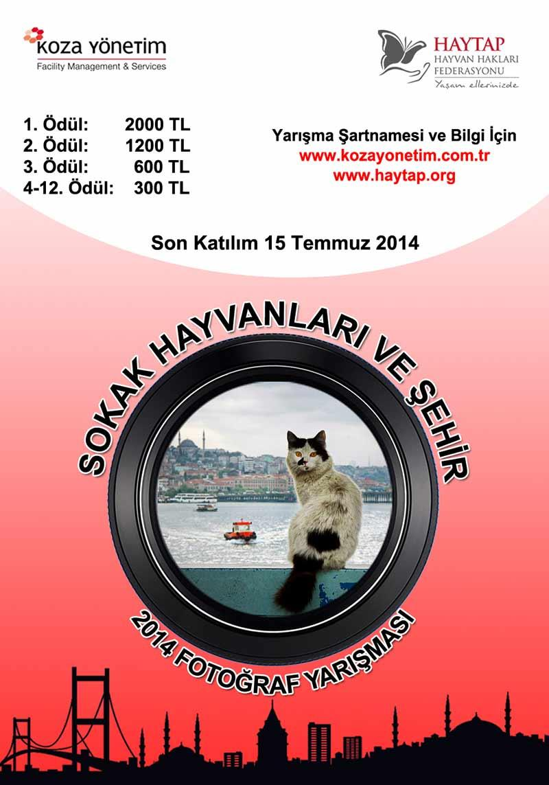 Haytap 2014 Sokak Hayvanları Fotoğraf Yarışması