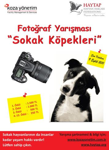 Haytap 2011 Sokak Hayvanları Fotoğraf Yarışması