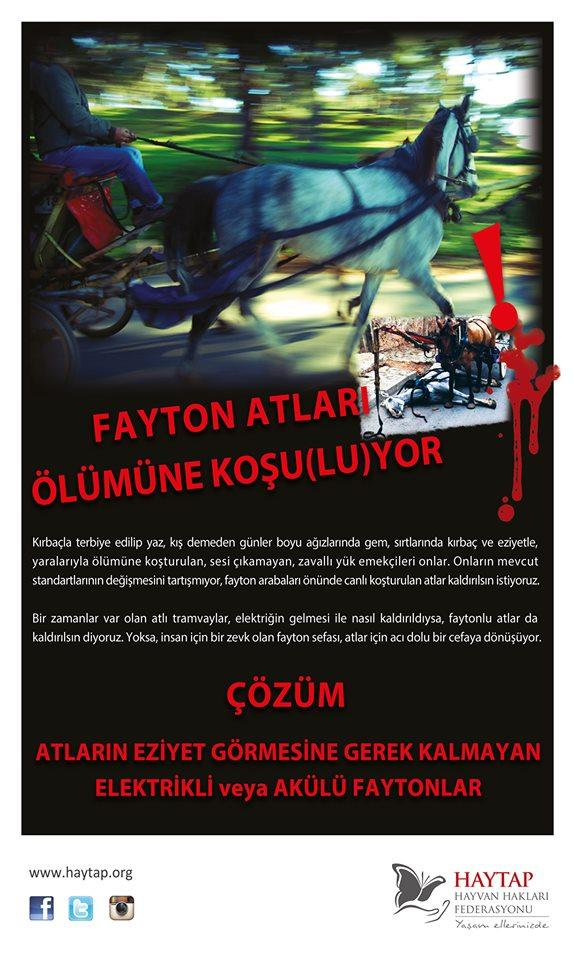 Fayton atları İzmir, Antalya, Kuşadası ve İstanbul'da Kaldırılıyor