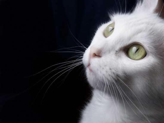 Kedinin Ölümündeki Veteriner Hatası ,  Tazminata Neden  Oldu !