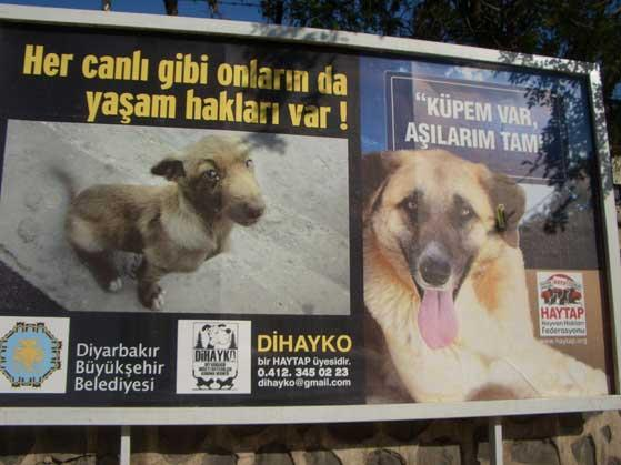 Haytap Billboardları Diyarbakır Caddelerinde !