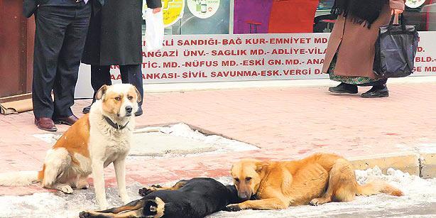 Haytap Activists Count Down to Criminalization of Animal Cruelty