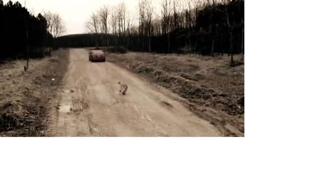 HAYTAP SHORT MOVIES ON ANIMAL RIGHTS