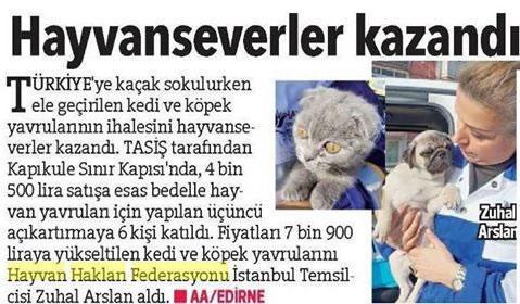 Kedi ve Köpekleri Petshopçuların Elinden Yine HAYTAP Kurtardı!
