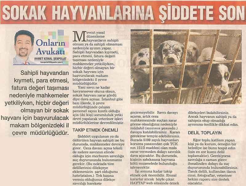 Sokak Hayvanlarına Şiddet İçin Başvurulacak Makam !