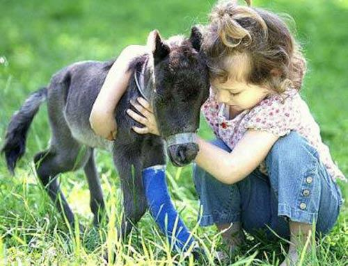 (*) What Must Be The Duties of An Animal Protection Society?