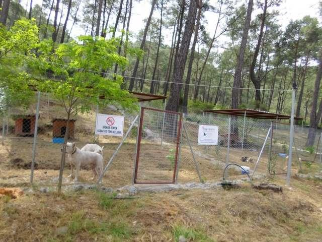 Haytap 2014 Takvim Geliri Ortaca Köpeklerine Yeni Yaşam Alanı Oldu