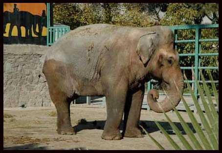 (*) Hayvanat Bahçelerine De Hayır !