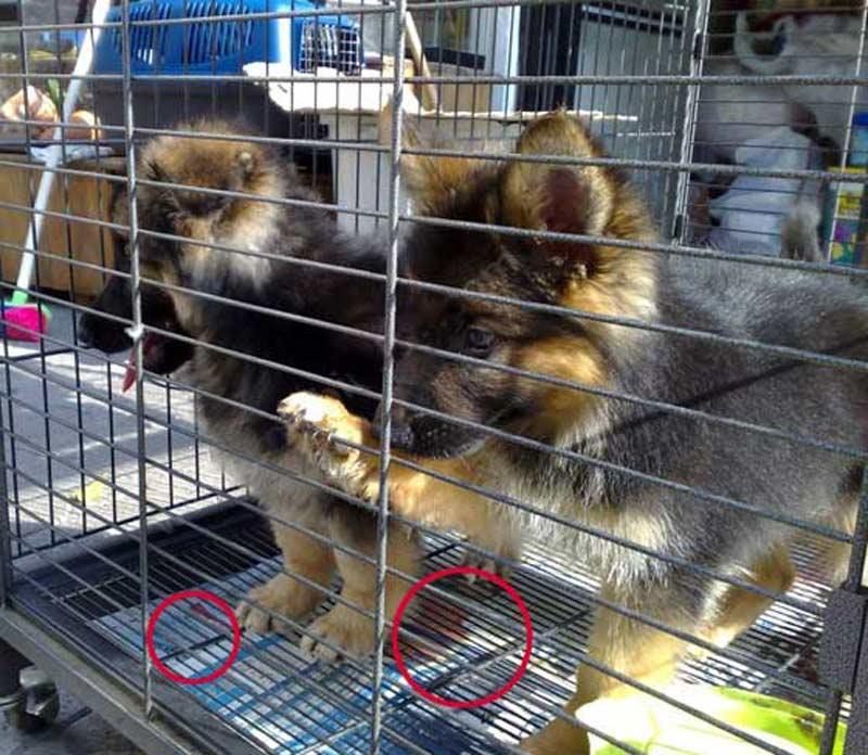 (*) Kanlı Pazar : Petshoplar ve Hayvan Kaçakçılığı