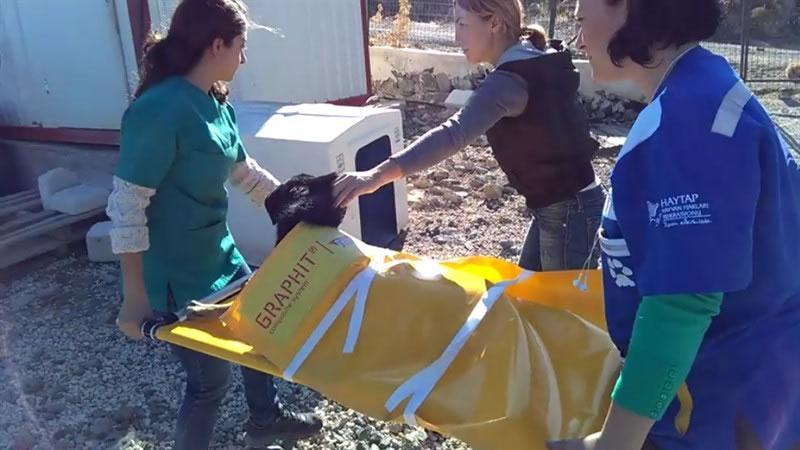 (*)TRILOGIQ & HAYTAP İş Birliği ile Hayvan Dostlarımıza Taşıma Sedyesi
