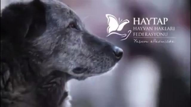 Haytap Yeni Kısa Film : Sokak Hayvanlarına Şiddete Birlikte Dur Diyelim…