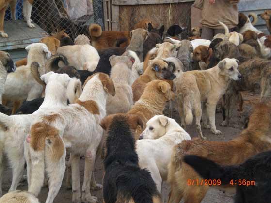 Köpekler ve İnsanlar - Işıl Özgentürk- Cumhuriyet