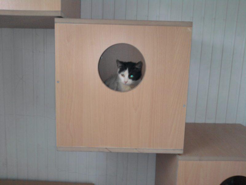 Haytap 2013 Takvim Geliri Diyarbakır'da Kedi Evi Oldu