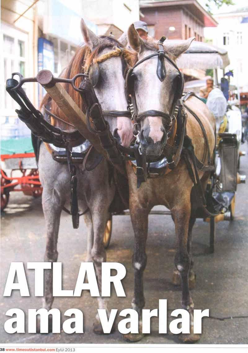 HAYTAP , Fayton Atlarına Neden Karşı ? Basın Yansımaları