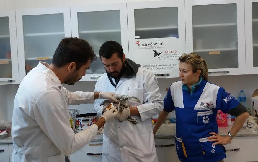 ?Haytap  2015 Takvim ?Gelirleri ile Yaralı Yaban Hayvanlarına Yardım