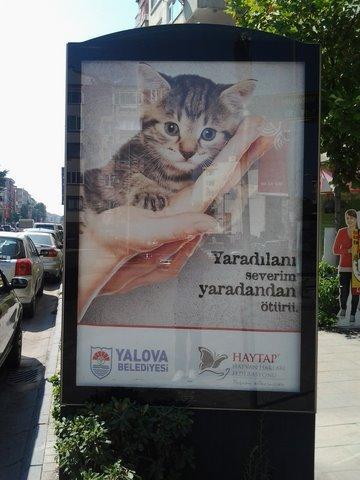 Yalova Caddeleri Haytap Görselleri İle Donatıldı...